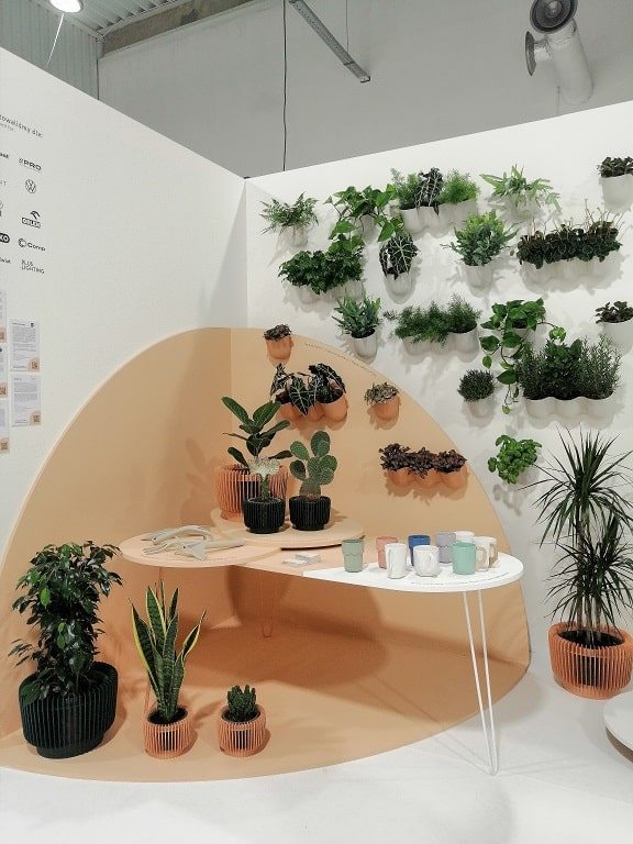 doniczki z małymi roślinami