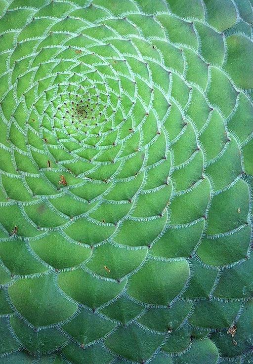 ciąg fibonacciego w liściu złota proporcja